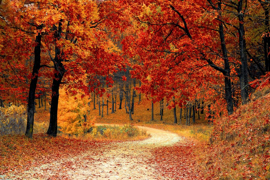 A photo of autumn on a winding road.